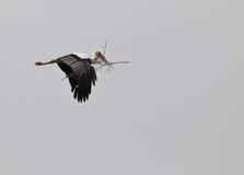 Weißer Storch auf Transport lizenzfreie stockfotos
