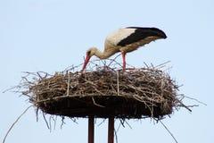 Weißer Storch in das Nest Stockfotos
