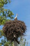 Weißer Storch in einem Nest auf einem Pfosten Lizenzfreie Stockfotografie