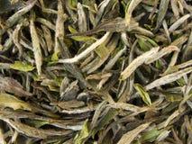 Weißer Tee - Bai MU Tan stockbilder