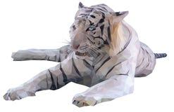 Weißer Tiger Lizenzfreies Stockfoto
