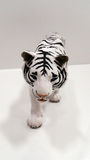 Weißer Tiger lizenzfreie stockbilder