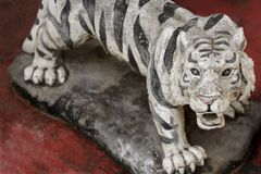 Weißer Tiger auf rotem Hintergrund Stockfoto
