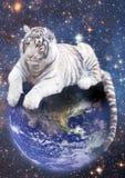Weißer Tiger, der auf Erde stationiert Stockfotografie