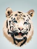 Weißer Tiger - ein Portrait Lizenzfreies Stockbild