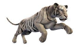 Weißer Tigerbetrieb, Tier auf weißem Hintergrund vektor abbildung