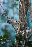 Weißer tropischer Vogel Lizenzfreie Stockfotografie