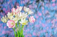 Weißer Tulpenblumenstrauß auf einem undeutlichen Hintergrund Lizenzfreies Stockfoto
