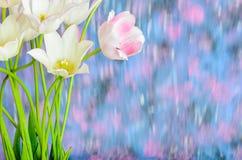 Weißer Tulpenblumenstrauß auf einem undeutlichen Hintergrund Lizenzfreie Stockfotos