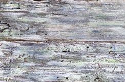 Weißer und blauer Hintergrund der gemalten Beschaffenheit auf verwittertem hölzernem Lizenzfreies Stockfoto