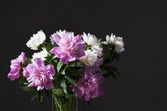 Weißer und rosa Pfingstrosenblumenstrauß Lizenzfreie Stockfotos