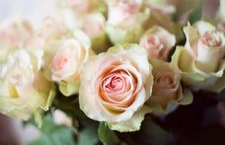Weißer und rosa Rosenhintergrund nahaufnahme Lizenzfreies Stockfoto