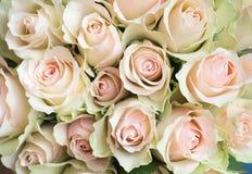 Weißer und rosa Rosenhintergrund nahaufnahme Stockbilder