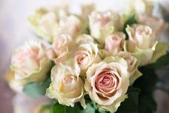 Weißer und rosa Rosenhintergrund nahaufnahme Stockfoto
