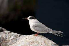 Weißer Vogel Stockbild