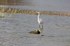 Weißer Vogel Lizenzfreie Stockfotografie