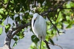 Weißer Vogel auf einer Niederlassung stockfotografie