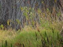 weißer Vogel in den Florida-Sumpfgebieten stockfotos