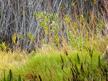 weißer Vogel in den Florida-Sumpfgebieten lizenzfreies stockfoto