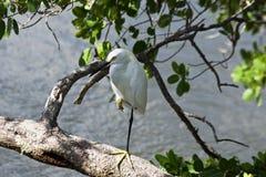Weißer Vogel, der im Wasser steht stockbilder