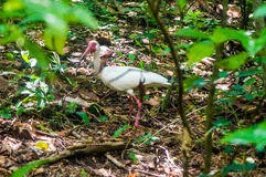 weißer Vogel im tropischen Wald stockfotos