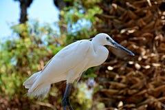 Weißer Vogel ist innerhalb des Zoos Stockfoto
