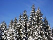 Weißer Wald Stockfotografie