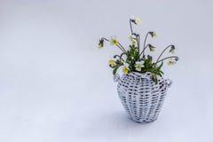 Weißer Weidenkrug mit gelben Veilchen auf einem weißen Hintergrund Lizenzfreie Stockfotografie