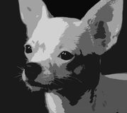 Weißer Welpe von Chihuahua Stockfoto