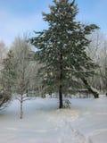 Weißer Winter stockfotografie