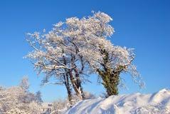 Weißer Winter Lizenzfreie Stockbilder