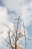 Weißer Winterhintergrund mit schneebedeckten Niederlassungen Lizenzfreie Stockbilder