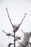 Weißer Winterhintergrund mit schneebedeckten Niederlassungen Stockfoto