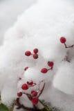 Weißer Winterhintergrund mit schneebedeckten Niederlassungen Lizenzfreies Stockfoto
