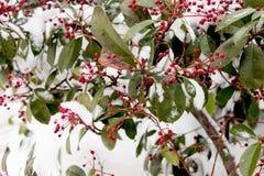 Weißer Winterhintergrund mit schneebedeckten Niederlassungen Lizenzfreie Stockfotografie