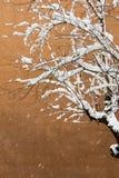 Weißer Winterhintergrund mit schneebedeckten Niederlassungen Stockbilder