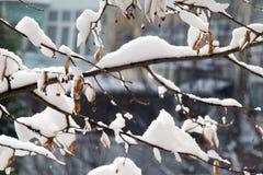 Weißer Winterhintergrund mit schneebedeckten Niederlassungen Stockbild