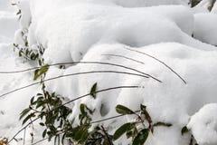 Weißer Winterhintergrund mit schneebedeckten Niederlassungen Lizenzfreie Stockfotos