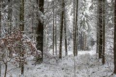 Weißer Winterwald Stockfotos