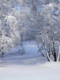 Weißer Winterwald Stockfotografie