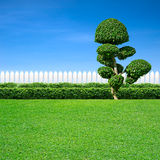 Weißer Zaun und dekorativer Baum lizenzfreie stockbilder