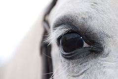 Weißes arabisches Pferdeauge Lizenzfreies Stockfoto