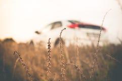 Weißes Auto mitten in dem Feld Lizenzfreie Stockfotos