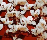 Weißes Bouganvilla auf roter gemalter Wand Lizenzfreies Stockfoto