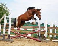 Weißes braunes Pferd Stockfotografie