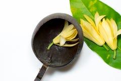 Weißes champaka, grünes Blatt und Kokosschale rollen Stockbild