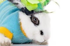 Weißes dalmatinisches Kaninchen mit schwarzen Flecken stockfotos