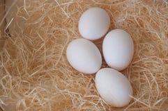 Weißes Ei im Kasten für Geschäft Lizenzfreie Stockfotos