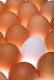 Weißes Ei zwischen Braun eine lizenzfreie stockfotos