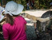 Weißes Eichhörnchen und kleines Mädchen in weißem Panama Lizenzfreie Stockfotografie